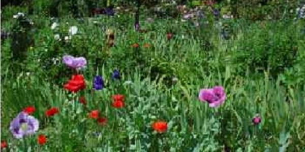 elgs flowers web